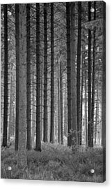 Vertical Forest Acrylic Print by Russ Dixon