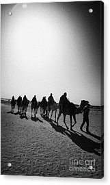 vertical hot sun beating down on sands and camel train in the sahara desert at Douz Tunisia Acrylic Print by Joe Fox