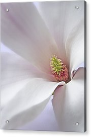Acrylic Print featuring the photograph Vertical White Flower Magnolia Spring Blossom Floral Fine Art Photograph by Artecco Fine Art Photography