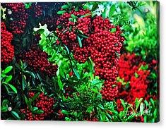 Very Berry Acrylic Print by Kaye Menner