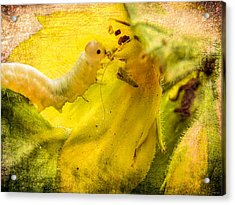 Very Hungry Caterpillar Acrylic Print