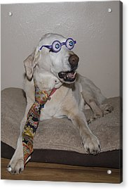 Very Intelligent Dog Acrylic Print
