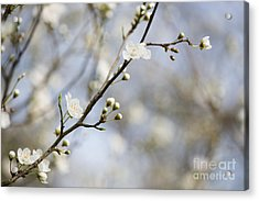Very Nearly Spring Acrylic Print by Anne Gilbert