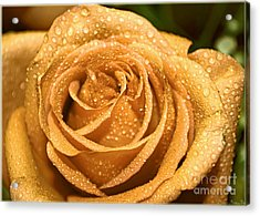 Very Wet Rose Acrylic Print by Debbie Portwood