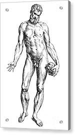 Vesalius: Male Nude Acrylic Print