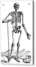 Vesalius: Skeletal System Acrylic Print