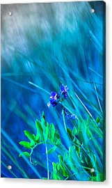 Acrylic Print featuring the photograph Vetch In Blue by Adria Trail