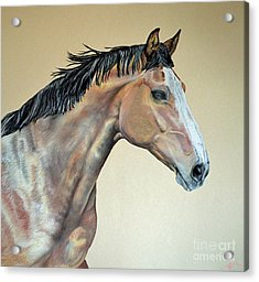 Veterinarian's Warm Blood Horse Acrylic Print by Ann Marie Chaffin