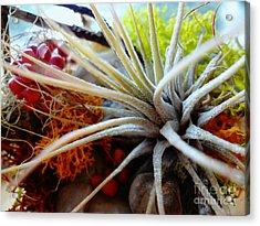 Vibrant Acrylic Print by Arlene Sundby