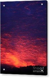 Vibrant Dawn Acrylic Print by Erica Hanel