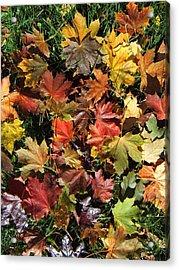 Vibrant Days Of Autumn Acrylic Print by Margaret McDermott