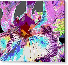 Vibrant Petals Acrylic Print by Sally Simon