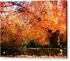 Vibrant Tree Acrylic Print