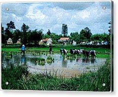 Vietnam Mekong Delta Acrylic Print