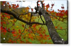 Acrylic Print featuring the photograph View From A Tree by Alex King
