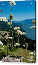 View From Cape Horn Acrylic Print by Cari Gesch