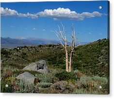 View From Laurel Lakes Trail Acrylic Print