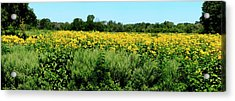 View Of A Field, Abshire Prairie Acrylic Print by Panoramic Images