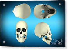 View Of Human Skull From Different Acrylic Print by Stocktrek Images