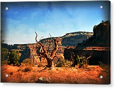 View Of The Canyon Acrylic Print by Marty Koch