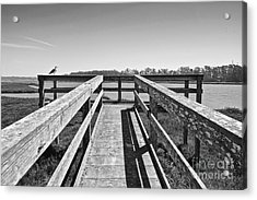 View Of The Elkhorn Slough From A Platform.  Acrylic Print by Jamie Pham
