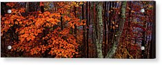 View Of Trees In Forest, Great Smoky Acrylic Print