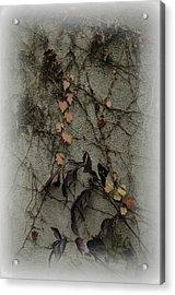 Vignes D'automne Acrylic Print