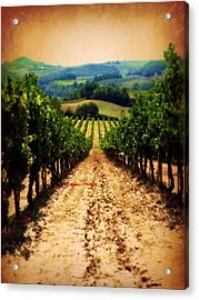Acrylic Print featuring the photograph Vigneto Toscana by Micki Findlay