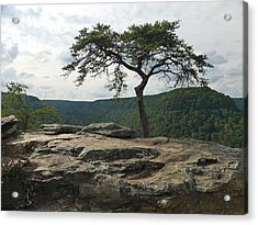 Vignette At Buzzards Roost Acrylic Print