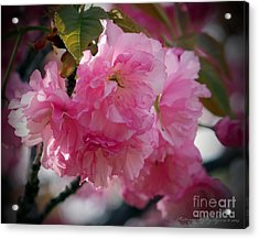 Acrylic Print featuring the photograph Vignette Cherry Blossom by Gena Weiser