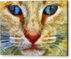 Vincent Acrylic Print by Michelle Calkins