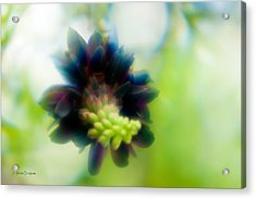Acrylic Print featuring the photograph Vine 1 by Travis Burgess