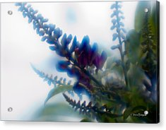 Acrylic Print featuring the photograph Vine 2 by Travis Burgess