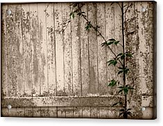 Acrylic Print featuring the photograph Vine And Fence by Amanda Vouglas