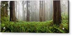 Vine Maple Acer Circinatum Trees Acrylic Print by Panoramic Images