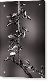 Vine On Iron Acrylic Print by Bob Orsillo