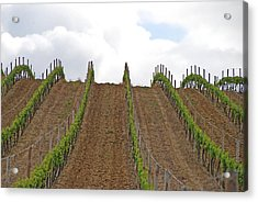 Vines Flow Over The Landscape Acrylic Print