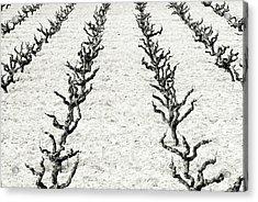 Vines Acrylic Print by Frank Tschakert
