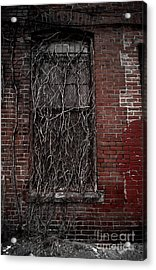 Vines Of Decay Acrylic Print by Amy Cicconi