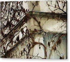 Vines Acrylic Print by Victoria Fischer