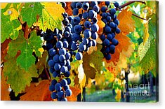 Vineyard 2 Acrylic Print by Xueling Zou