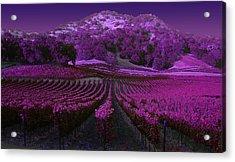 Vineyard 41 Acrylic Print