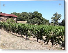 Vineyard And Stallion Barn At Historic Jack London Ranch In Glen Ellen Sonoma California 5d24579 Acrylic Print by Wingsdomain Art and Photography
