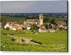 Vineyard And Village Of Pommard. Cote D'or. Route Des Grands Crus. Burgundy. France. Europe Acrylic Print by Bernard Jaubert