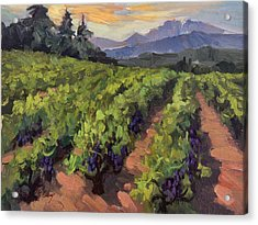 Vineyard At Dentelles Acrylic Print by Diane McClary