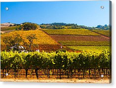 Vineyard Colors Acrylic Print