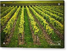 Vineyard Acrylic Print by Elena Elisseeva