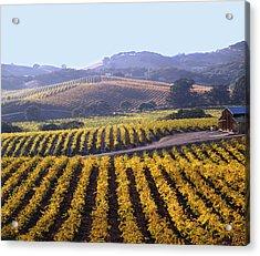 6b6386-vineyard In Autumn Acrylic Print