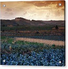 Vineyard In Krushevac. Serbia Acrylic Print by Juan Carlos Ferro Duque