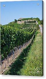 Vineyard In Rhineland Palatinate Acrylic Print by Palatia Photo